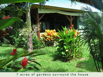 Beautiful tropical flowers and trees surrounding the house
